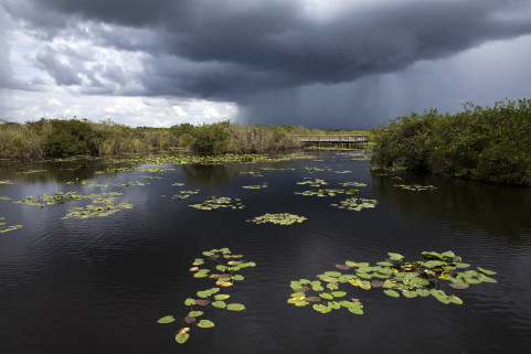 Everglades. Florida. July 2014